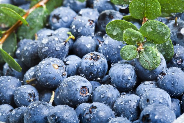 blueberries-fresh.jpg.838x0_q80