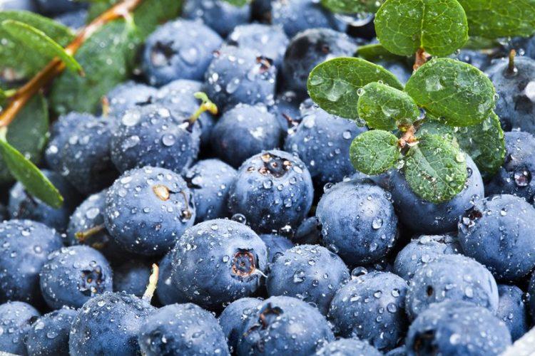 blueberries-fresh.jpg.838x0_q80