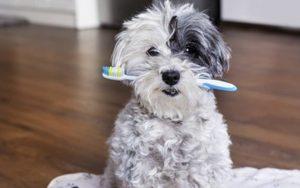 Pet-Deltal-Health-FTR